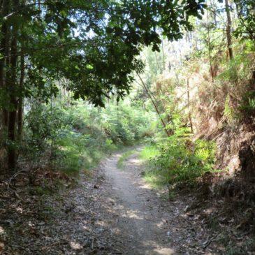 Walking The Camino Portugués – May/June 2014