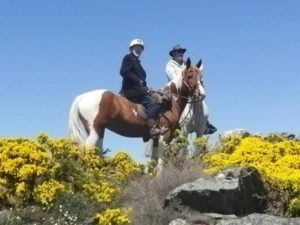 Horses and gorse!