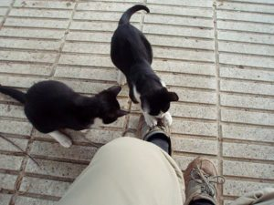 Kittens pounce on feet, 2009