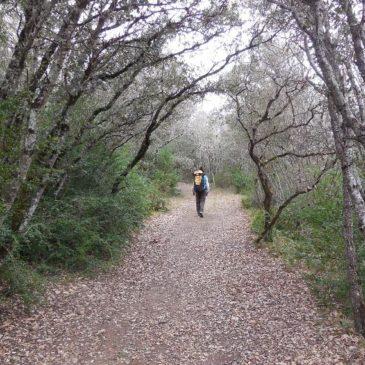 The Catalan  Way (Montserrat To San Juan De  La Pena,  Near Jaca)  & The Aragonés Way (San Juan De La Pena To Puenta La Reina)