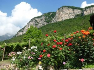 Walking below the Dolomites