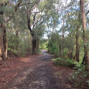 Why A Camino For Sydney?