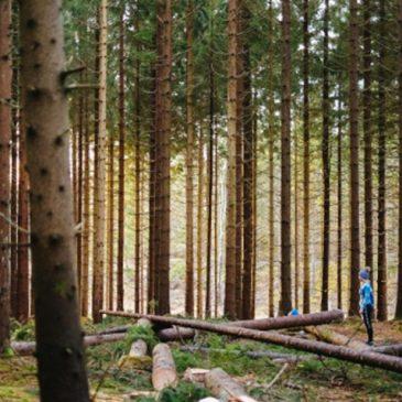 Camino Trees